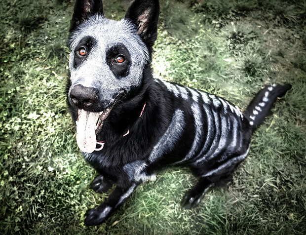 skeleton-dog1