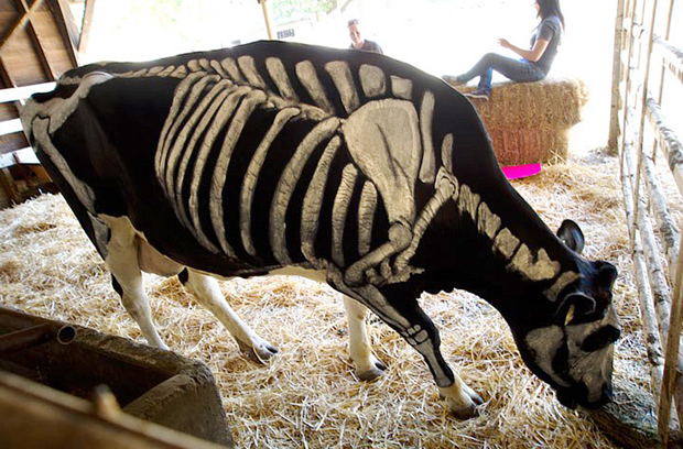 skeleton-dog6